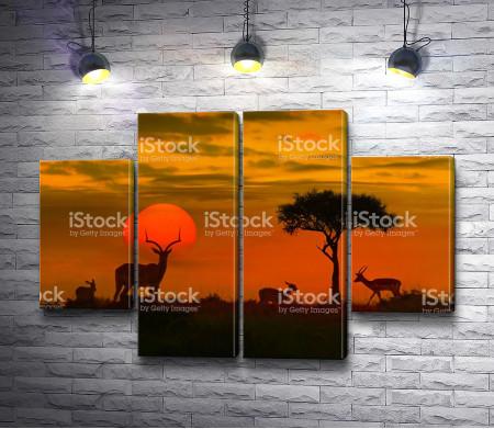 Антилопы во время заката