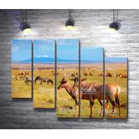 Антилопы и зебры на фоне горы