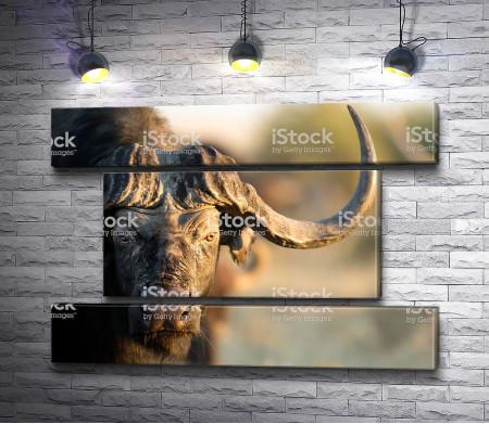 Суровый буйвол