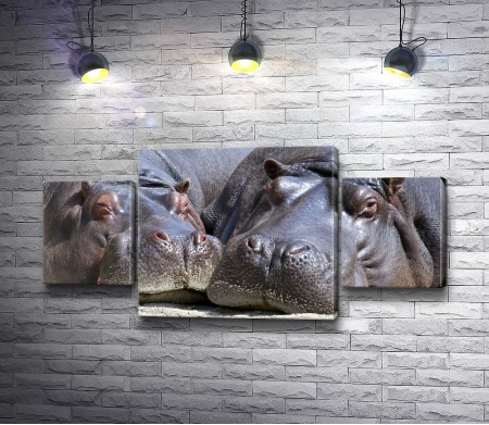 Два бегемота