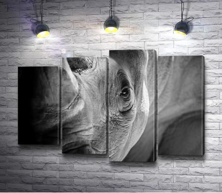 Носорог крупным планом