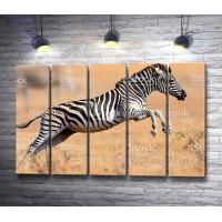 Зебра в степи