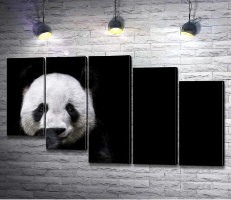 Морда панды на черном фоне