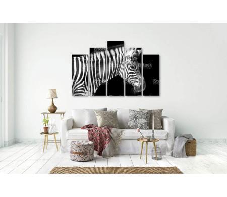 Профиль зебры