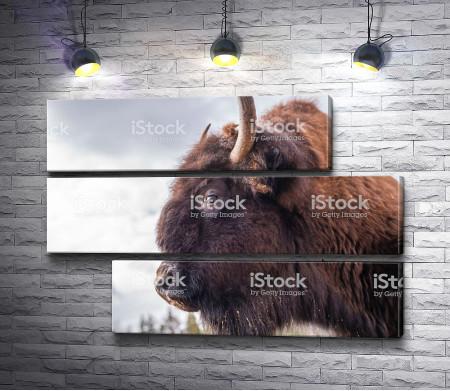 Свирепый бизон