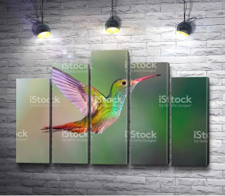 Яркая колибри