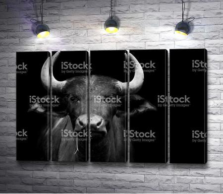 Африканский буйвол, черно-белое фото