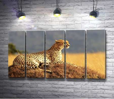 Грациозный гепард лежит в степи
