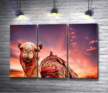 Довольный верблюд на фоне заката