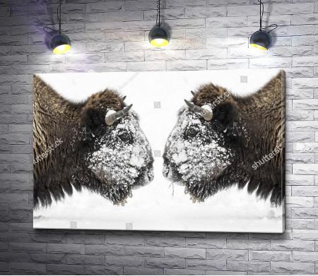 Бизоны в снегу
