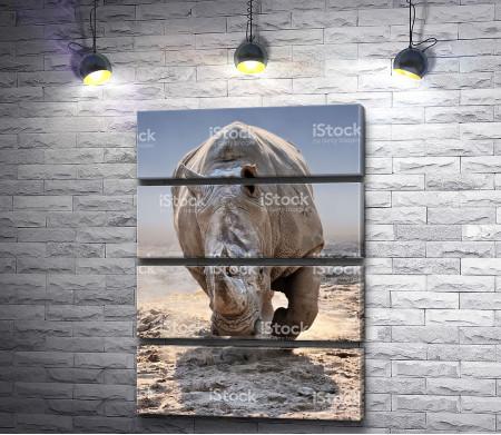 Носорог на прогулке