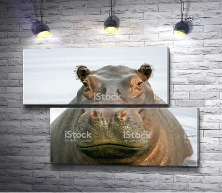 Задумчивый бегемот