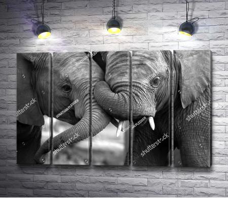 Любовь между слонами