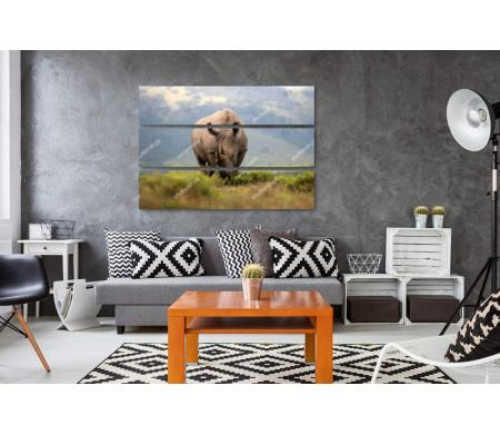 Носорог в поле