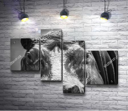 Черно-белый гиппопотам