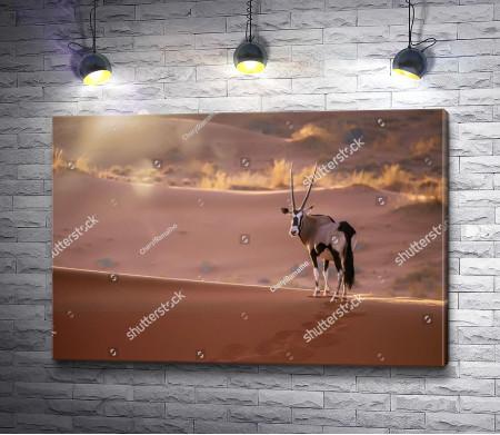 Газель в пустыне