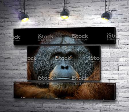 Морда обезьяны