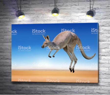Прыгучий кенгуру