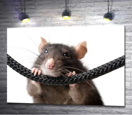 Крыса на шнурке