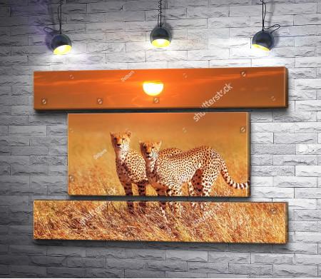 Гепарды в Национальном парке, Африка