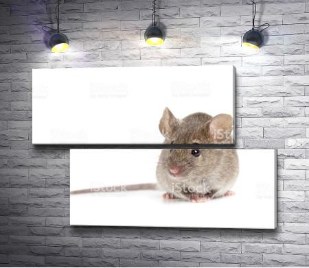 Мышь на белом фоне