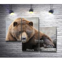 Бурый медведь на отдыхе
