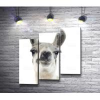 Забавная лама