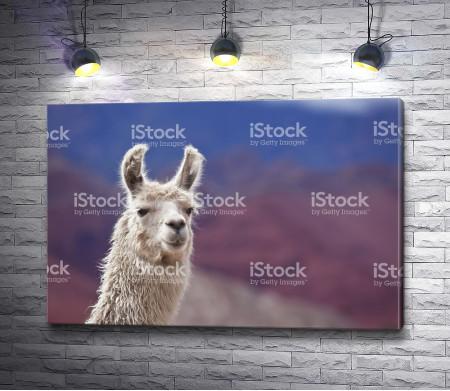Милая лама
