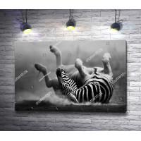 Зебра во время игры