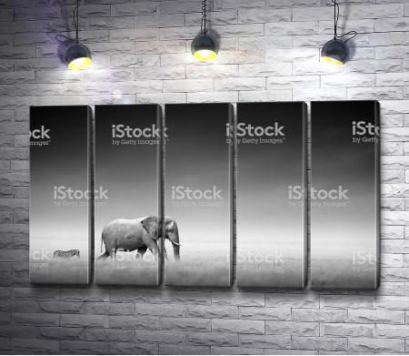Слон и зебра в Африке, черно-белое фото