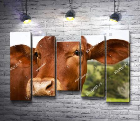 Грустная корова
