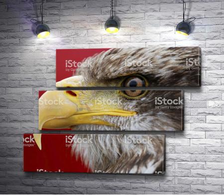 Зоркий взгляд орла