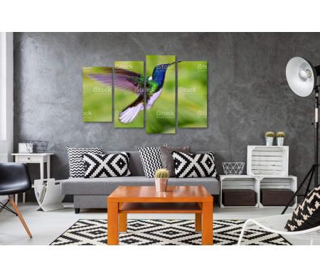 Колибри-якобины с красивыми крыльями