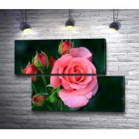 Бутон розовой розы