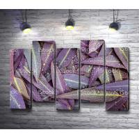 Фиолетовые листья алоэ