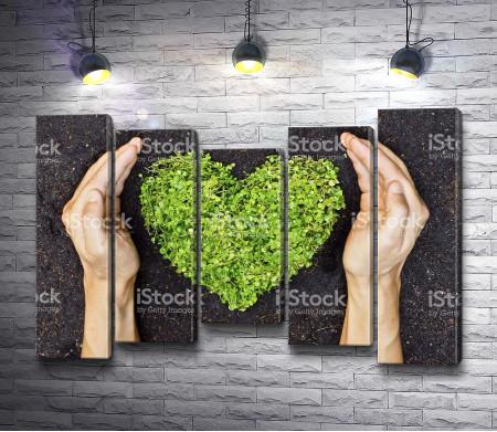 Трава в форме сердца в руках