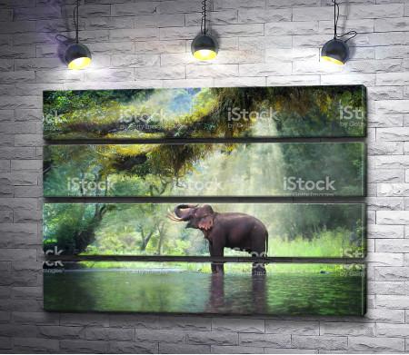 Слон купается в водоеме