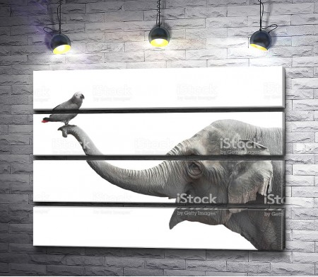 Попугай на хоботе слона