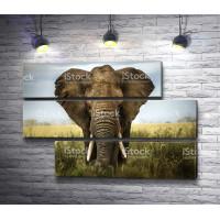Слон в Сафари