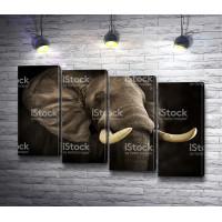 Слон с большими бивнями