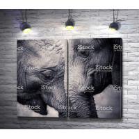 Нежность между большими слонами