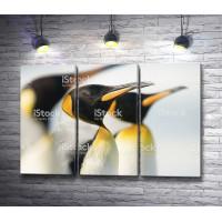 Мордочки пингвинов
