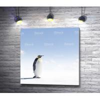 Одинокий пингвин на снежном просторе