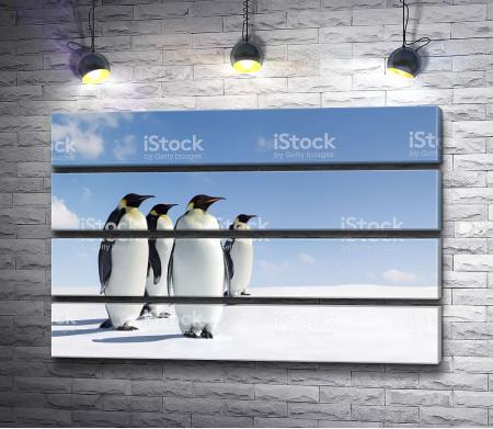 Пингвины на снегу