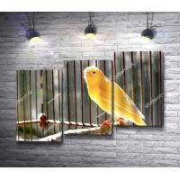 Домашняя канарейка желтого цвета