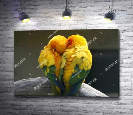 Любовь между попугаями