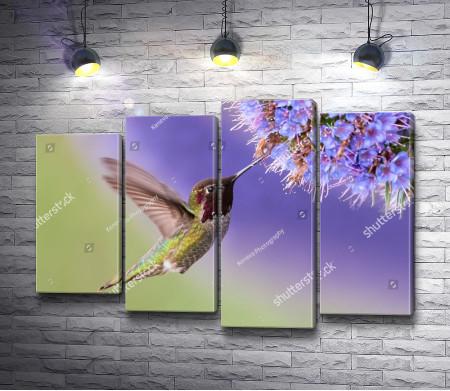 Маленькая колибри и цветок