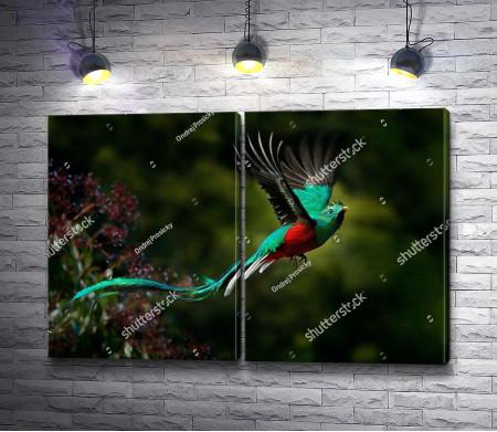 Необычная тропическая птица
