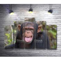 Веселая обезьяна