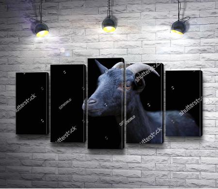 Черная коза